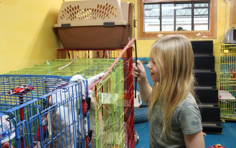 Amelia Williams, 9, plays with a kitten at LCMS Tuesday afternoon. She was hoping to find a kitten she could adopt. (TONY BRITT/Lake City Reporter)