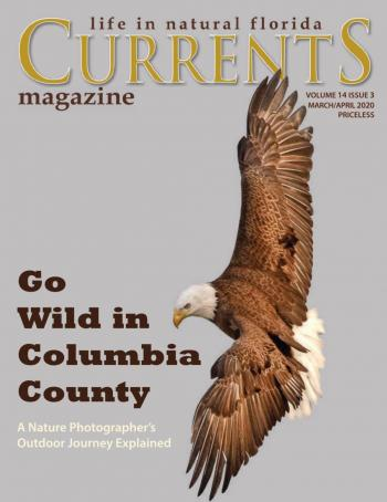 Lake City Currents March/April 2020